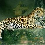 Olimpiadi Rio 2016. Ucciso il giaguaro mascotte