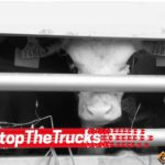 ACTION! #Stopthetrucks. Firma contro i trasporti lunghi