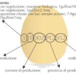 Impara a riconoscere le uova cruelty-free