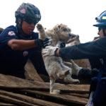 Terremoto. Info utili per chi voglia aiutare gli animali