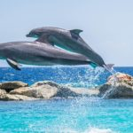 La conversazione tra due delfini registrata dagli scienziati russi