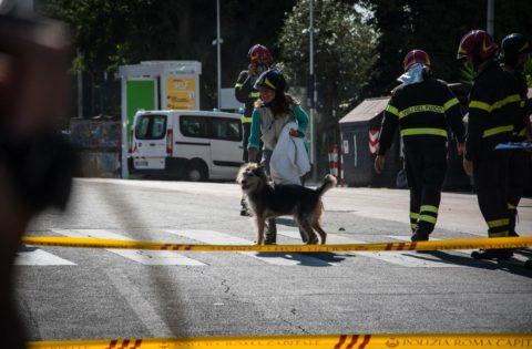Billo, il cane salvato dai pompieri (Foto Omniroma)