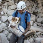 Terremoto, l'emergenza animali continua. Come aiutare