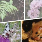 Biodiversità minacciata, la via di fuga è il monitoraggio