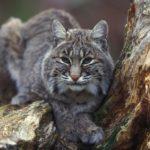 Wwf, entro il 2020 addio a due terzi delle specie