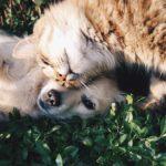 Animali, sondaggio online per migliorare servizi e politiche