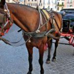 Botticelle, il Tar del Lazio ha sospeso lo stop nel gran caldo