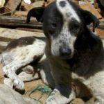 """Terremoto, Enpa: """"Strutture ricettive accettino gli animali"""""""