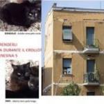 ACTION! Mailbombing per salvare i gatti di Ponte Milvio