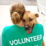 Animali, AgireOra lancia una piattaforma per i volontari