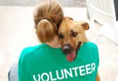 volontario volontari