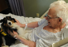LANGLEY AIR FORCE BASE, Va. -- Gene Mohr, a retired Tech. Sergeant, pets Mollie, a three year old Sheltie at Langley Hospital Jan. 30.  Mollie does about 10 visits throughout the Hampton Roads Area.  This is her third week visiting Langley Air Force Base.  (U.S. Air Force photo/Airman 1st Class Zachary Wolf)