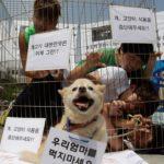 Al bando la macellazione dei cani a Seongnam (Corea)
