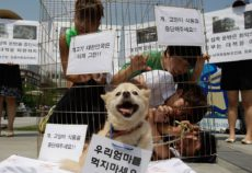 SEOUL, SOUTH KOREA - AUGUST 07:  Members of Coexistence for Animal Rights confine themselves in a cage as a protest against eating dog meat on August 7, 2012 in Seoul, South Korea. Dog meat is a traditional dish in Korea dating back to the Samkuk period (period of the three kingdoms BC 57 - AD 668), and July 15 is the day on which some South Koreans eat dog meat in the belief it will help them endure the heat of the summer months.  (Photo by Chung Sung-Jun/Getty Images)
