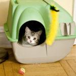 Usiamo lettiere vegetali per i gatti. Un gesto eco e sano