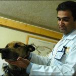 Diritti animali, un veterinario iraniano sfida la legge