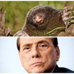 Berlusconi animalista? Non con le talpe