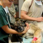 Lavoro, ok al permesso retribuito per curare il pet