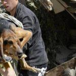 La Protezione Civile deve soccorrere anche gli animali