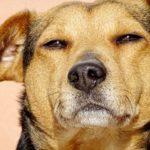 """I cani fanno gli """"occhi dolci"""" solo agli umani"""
