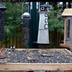 Uccelli. Mangiatoie e cibo adatti specie per specie