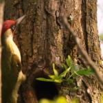 ACTION! Salviamo 21 ettari di bosco di Decima e i suoi animali