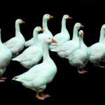 Questionario sulle intenzioni d'acquisto di piumini e pellicce
