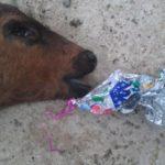 I palloncini colorati possono uccidere [Video e foto]