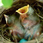 Il rischio delle potature e degli sfalci in periodo riproduttivo