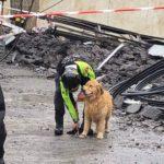 Animali sfollati a Genova: i recapiti per i soccorsi