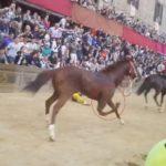 Palio di Siena, un altro cavallo morto