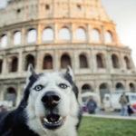 Animali. Le novità del nuovo Regolamento di Roma