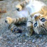 """""""Gatto che giochi per strada"""" di Fernando Pessoa"""