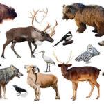 Per un'Europa dalla parte degli animali, consultazione pubblica