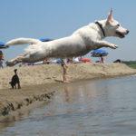 Riapre il Baubeach, la spiaggia per i cani (umani ammessi)