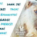 Elezioni europee, come votare per gli animali