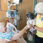 Animali, sempre più ospedali li fanno entrare. La mappa