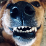 YouVet. L'igiene orale del cane in 5 mosse