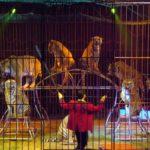 Chiude il circo Nock anche grazie alle norme pro animali