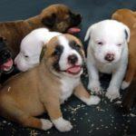 Traffico di cuccioli, la Cassazione conferma condanna a 5 mesi di reclusione
