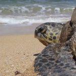 Inquinamento. Uccisa una tartaruga marina da una lenza