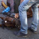 """Oipa: """"I cavalli delle botticelle ancora sotto il sole cocente"""""""