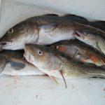 Di cosa è ricco il pesce? Di microplastica