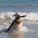 Cani in spiaggia? Occhio ai provvedimenti locali