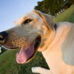 Cani, cinque motivi per cui migliorano la nostra vita