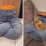 Dai jeans alla cuccia-pupazzo per il gatto