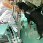 Pet visiting anche all'Ospedale Stefano di Prato