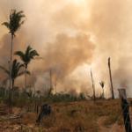 Distruzione habitat sia crimine contro l'umanità, petizione Wwf