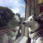 Viaggiare in treno con i nostri animali domestici