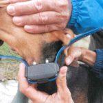 La Cassazione conferma: usare il collare elettrico è reato
